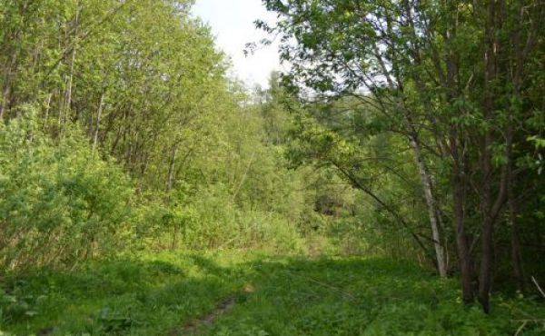 Дачный участок в СНТ Колпяна 115 км от МКАД