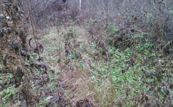Лесной участок 10 соток в СНТ Строково (10 км от Волоколамска)